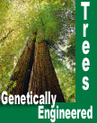 Genetically Engineered Trees
